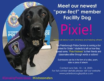Peterborough Police Service welcomes a new paw-fect member to its team!